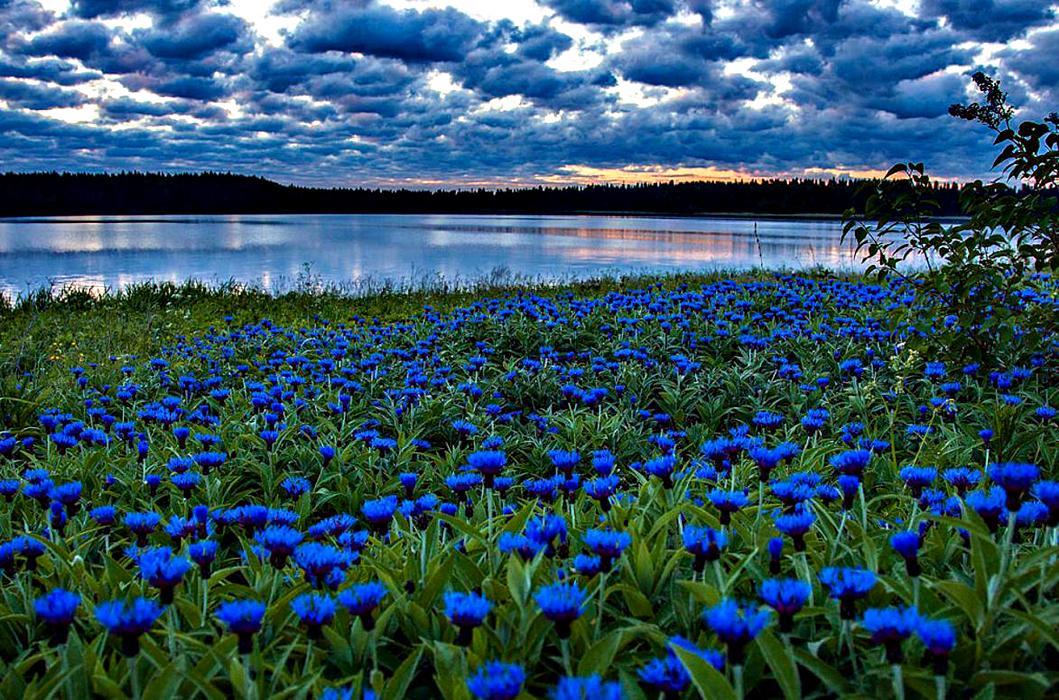 Эрмитаж ставрополь фото рекомендует весну