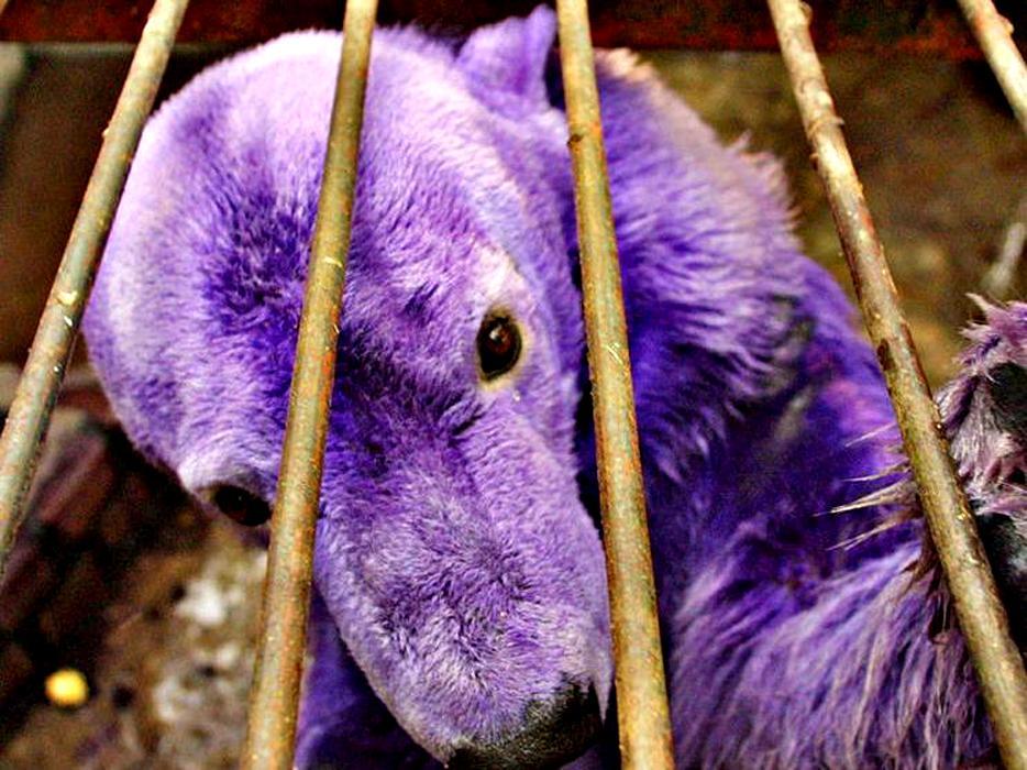 продукты фиолетовые животные фото например, этот мужичок