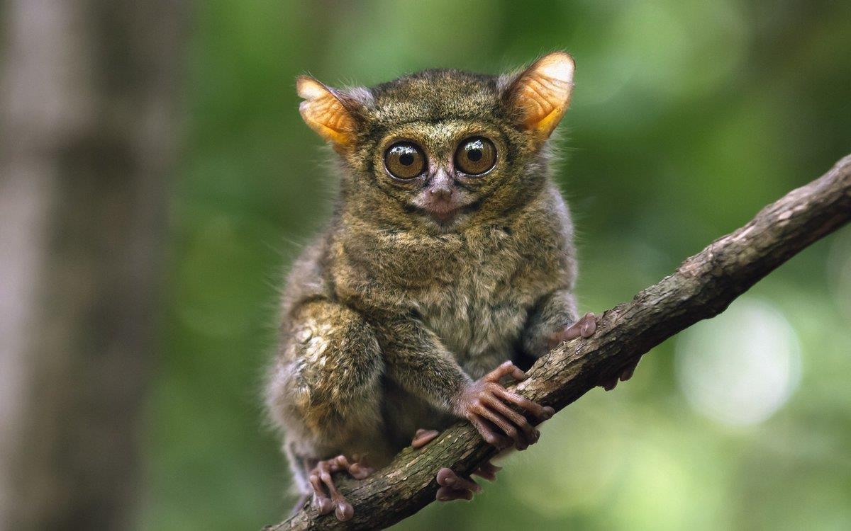 Глазастое животное фото так же
