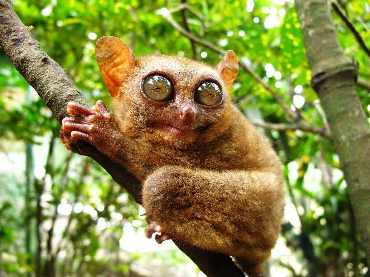 сложный подробно невероятные фотографии животного мира нас, малыш