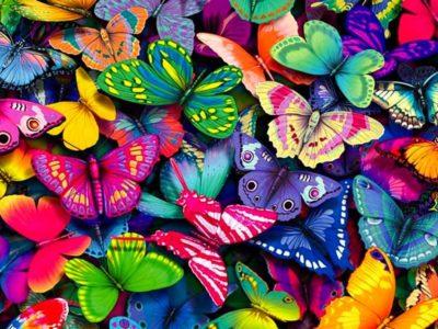 Отряд чешуекрылые (Бабочки)