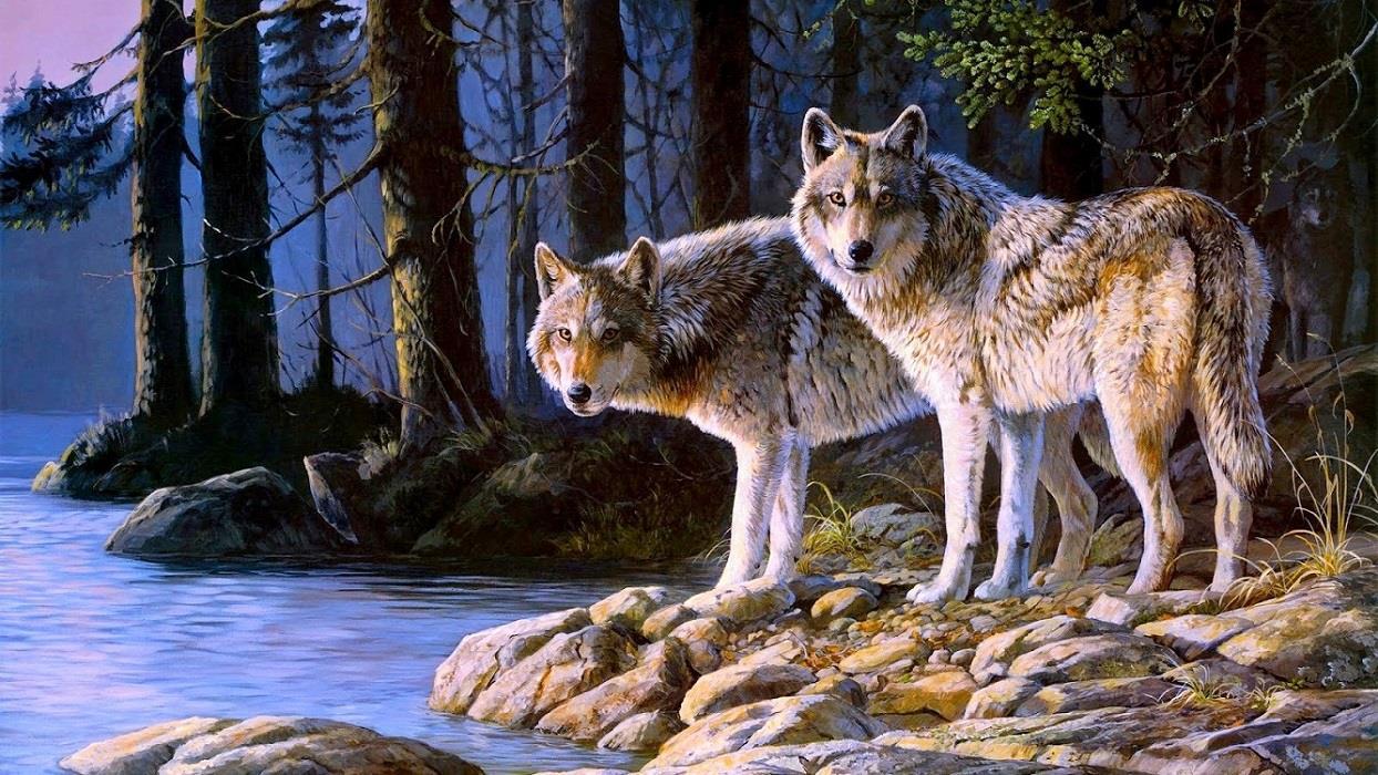 Виды серого волка