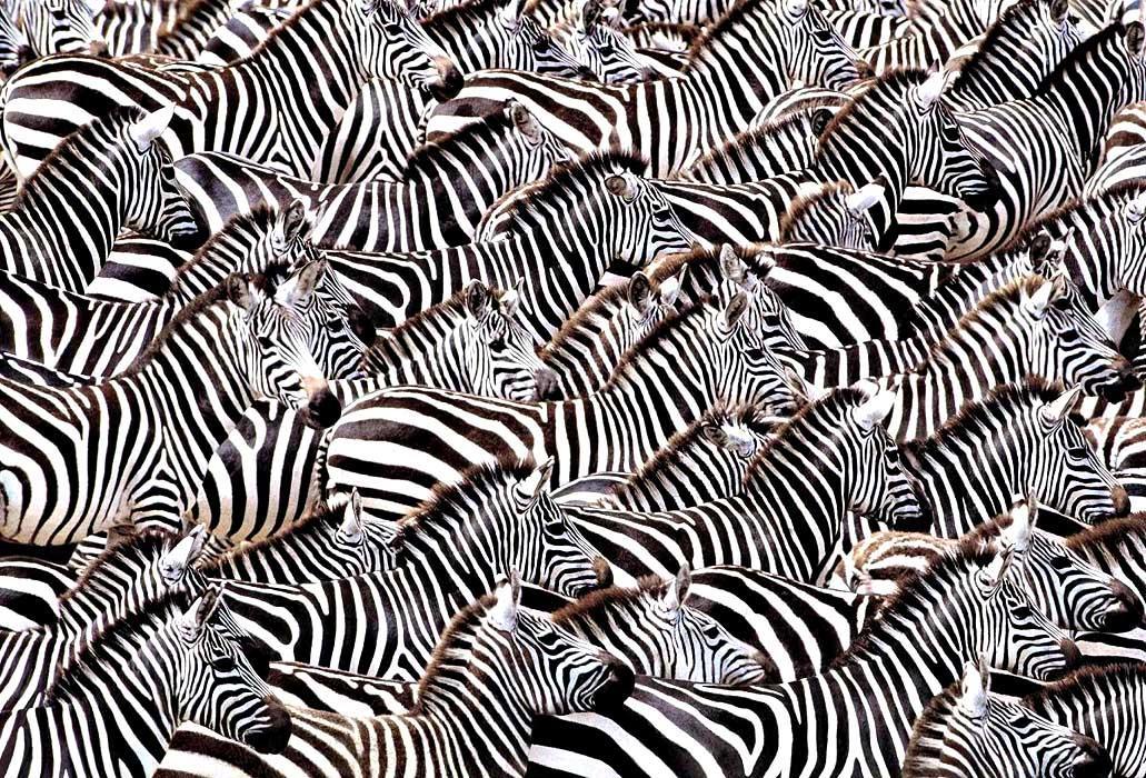 скачать зебру для написания рефератов