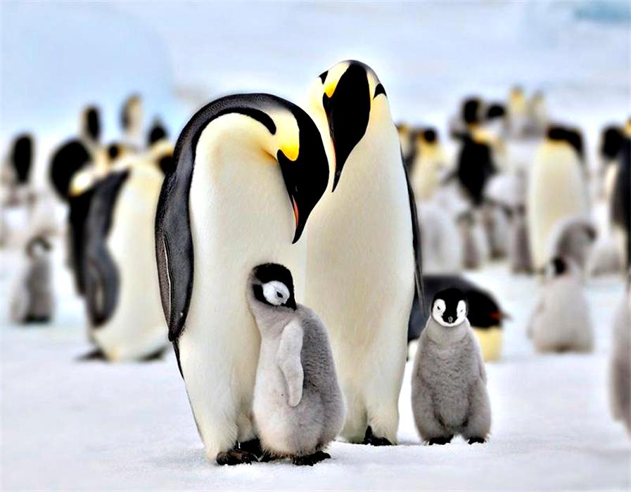 penguin christian personals Gentoo penguin in petemann island, antarctica did you know that penguin awareness day is january 20 and world penguin day is april find this pin and more on happy feet: penguins by linda mathes national penguin awareness day is celebrated on january of each year.