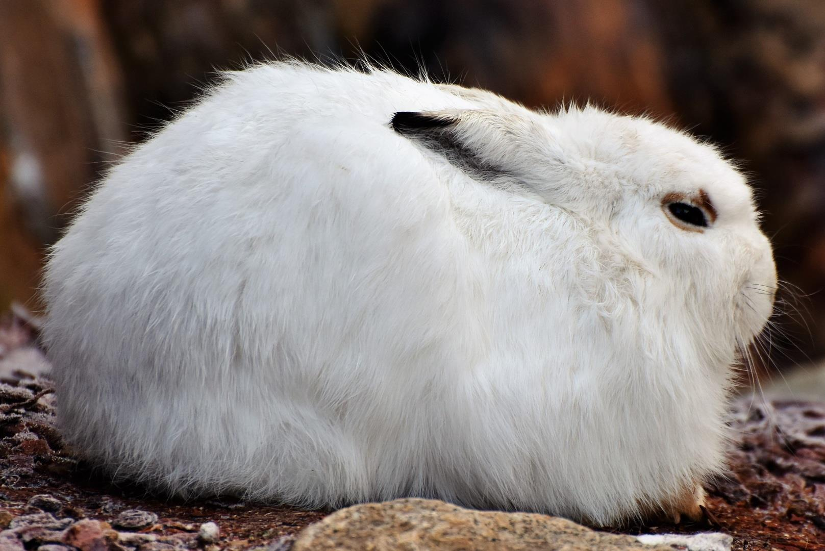 животное заяц фото