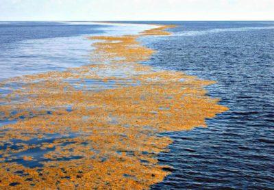 Саргассово море — самое большое море