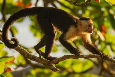Животное обезьяна